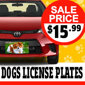 banner-dogs-license-plates